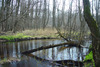 Mołstowa w kwietniu