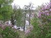 Widok ze Szwedzkiej Góry na jezioro Kochle (Pszczew)
