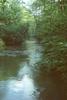 Płynie Przemsza przez las