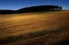 Kaszubskie łąki