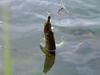 Kiedyś wyrośnie na kawał ryby, mam nadzieję