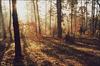 Takie zdjecie jak u Tomka Siudakiewicza w galerii :-)